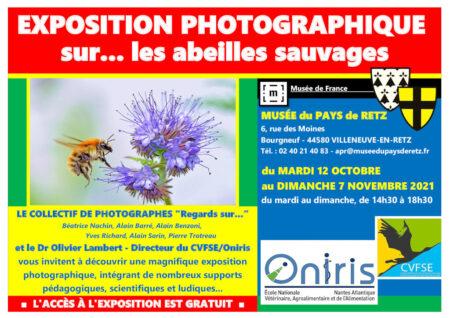Exposition photographique et pédagogique sur les ABEILLES SAUVAGES (du 12 octobre au 7 novembre)